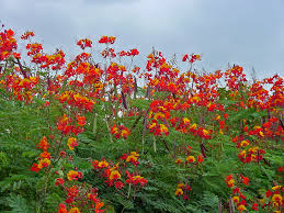 texas native plants list plant answers