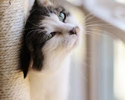 feline leukemia education
