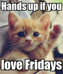Good Morning Cat Meme - hands up if you love friday friday happy friday tgif good morning