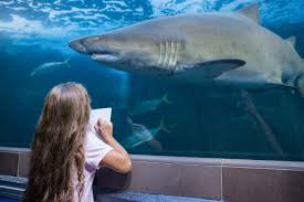 shark week 2016 the perfect q u0026a for your budding scientist