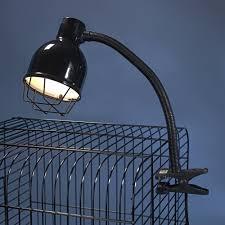 uv light for birds uv light for birds birds of prey