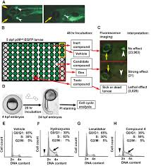 zebrafish screen identifies novel compound with selective toxicity