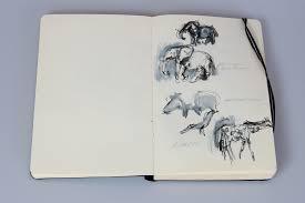 quick sketches of animals i saw on safari u2013 a summary carla u0027s blog