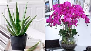 Plants For Dark Rooms by 9 Plants Which Give Out Oxygen Even During The Night Youtube
