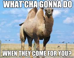 Camel Memes - funny camel meme when they come for you image