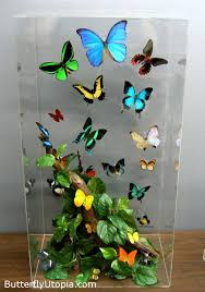 butterfly gifts beautiful butterflies beautiful butterfly butterfly gift
