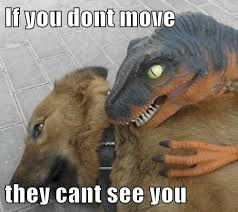 Dinosaurs Meme - i has a hotdog dinosaurs funny dog pictures dog memes puppy