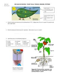transport in tracheophyte plants cloze worksheet