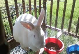 Rabbit Hutch For 4 Rabbits Rabbit Hutch Ideas Diy Projects Craft Ideas U0026 How To U0027s For Home