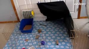 Rabbit Hutch Set Up How To Set Up A Rabbit Cage Youtube