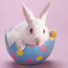 bunny rabbit legal theorist