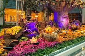 Bellagio Botanical Garden Wine Country Welcomes The Spirit Of Autumn At Bellagio S