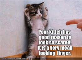 Scared Cat Meme - lolcats scared lol at funny cat memes funny cat pictures with