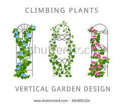 Vertical Garden Trellis - vector flat illustration garden trellis climbing stock vector