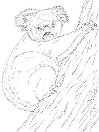 koala climbing tree coloring free printable coloring pages