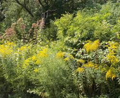 native plant gardens native plants at the brooklyn botanic garden naturesurrounds