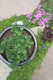 Plants That Need Low Light Everything You Need To Know About Growing Oregano Kitchn