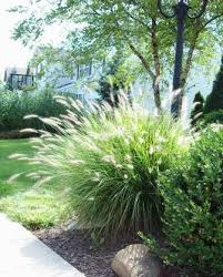accessorize your yard with ornamental grasses minnesota wonderer