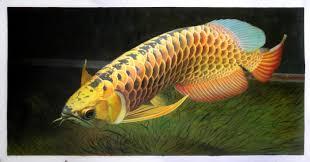 scleropages formosus asian arowana asian bonytongue golden