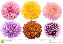 download different pictures of flowers solidaria garden