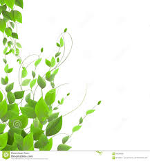dense foliage on a white background climbing plants vector stock
