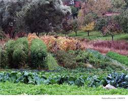 nature landscapes small vegetable garden in fall various plants