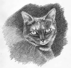 draw a cat in four steps more or less carol u0027s drawing blog