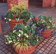 Plants For Patio by Best Plants For Container Garden Ward Log Homes