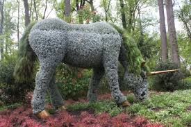 Botanical Gardens In Atlanta Ga by Plant Giants At The Atlanta Botanical Garden Lost In Internet