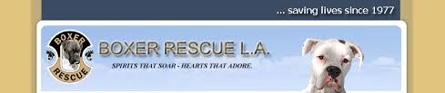 boxer dog adoption los angeles brla main page