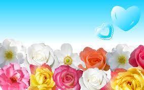 flowers wallpaper download 1219 7001273