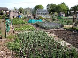allotment garden vegetable fruit u0026 herb gardening on an