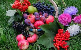 imagenes gratis de frutas y verduras verduras frutas flores fondos de pantalla gratis