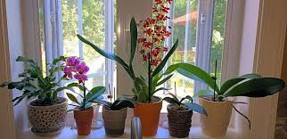 orchids care how to care for orchids a comprehensive organic guide earthworm