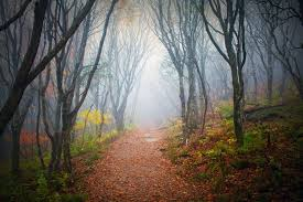 into the forest free stock image by kevron2001 on deviantart