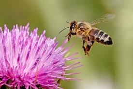 flowers for bees birds u0026 butterflies the backyard naturalist