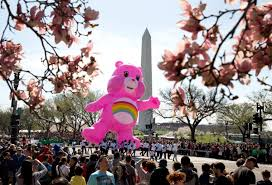 National Cherry Blossom Festival by Cherry Blossoms Bloom In Washington D C
