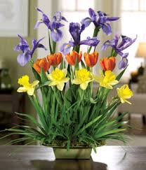 florist express florist express flowers florists flowers and
