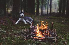 dog forest fireplace wallpapers hd desktop and mobile backgrounds