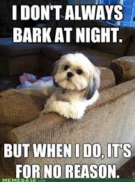 Annoyed Dog Meme - annoying dog obviously i thought this shit was funny pinterest