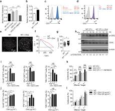 cholesterol level of the plasma membrane directly affects cd8 t