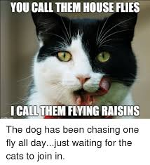Flying Cat Meme - you call them house flies i call them flying raisins the dog has