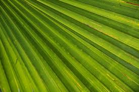 where to buy palms for palm sunday palm sunday is a reminder that god wins always reignite my story