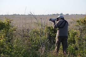 native prairie plants katy prairie conservancy presents prairie restoration roundup