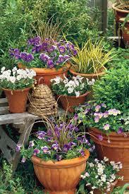 Fall Garden Plants Texas - beginner u0027s guide to chrysanthemums southern living