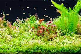 Takashi Amano Aquascaping Techniques Everything About Aquascaping The Incredible Underwater Art
