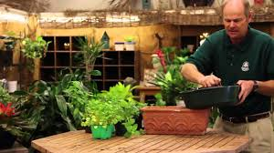 Herbs Indoors The Best Way To Grow Herbs Indoors Youtube