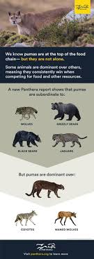 National Geographic Infographic Reveals What The Consumes Published In Peerj We Found That