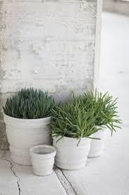 152 best planter images on pinterest plants planters and pots