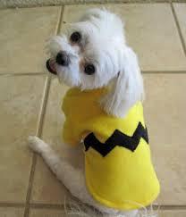 Charlie Brown Costume Diy Charlie Brown Costume Petdiys Com